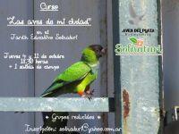 curso aves de mi ciudad