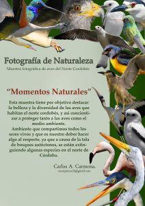 carmona fotomontaje calidad web