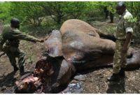 elefantes muertos