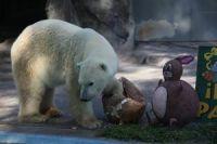 oso polar winner