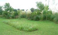Jardines_amigables_con_la_naturaleza