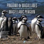 pinguino patagónico o de Magallanes