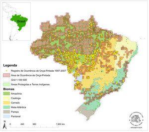 Distribución del yaguareté en Brasil