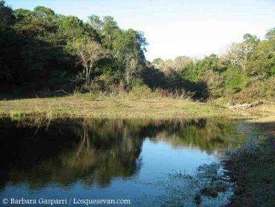 Selvas en Galería del Río de Oro