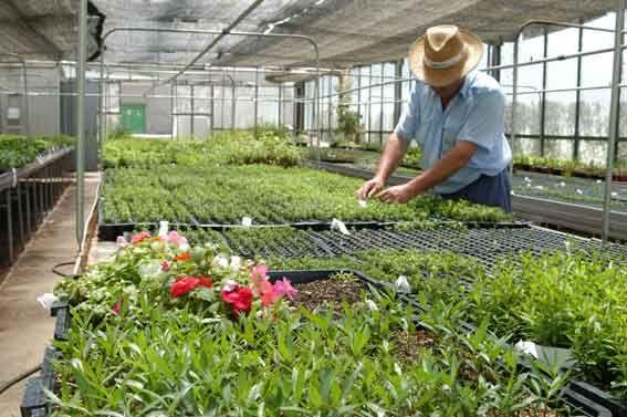 Cursos ambientales en parque avellaneda for Estudiar jardineria