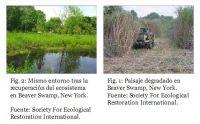 restauración ambiental